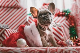 Dog in christmas presents